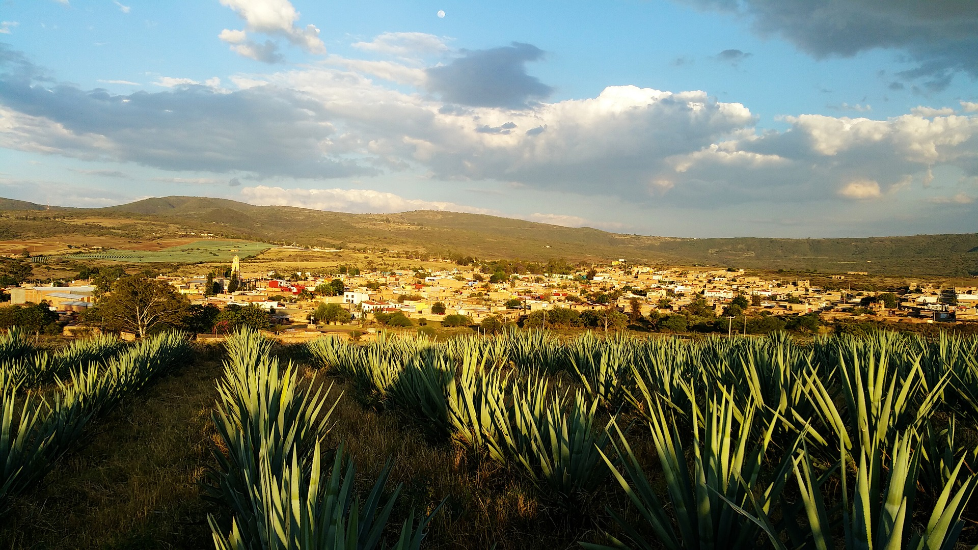 Musk Makes Moves on Tequila Industry with Teslaquila