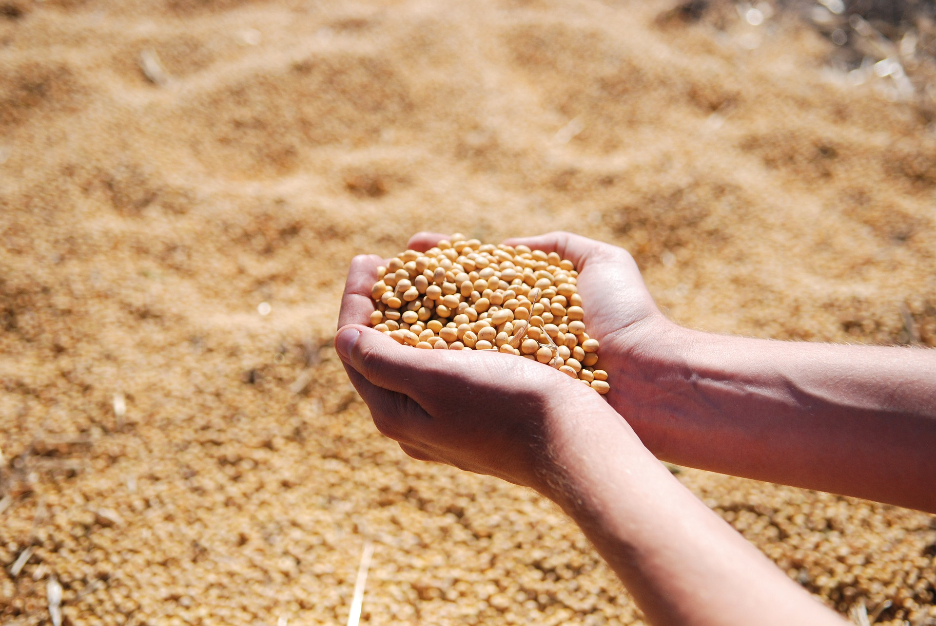 Soybean Prices Surge Amidst Agreement