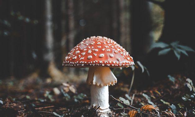 'Magic mushroom' legalization may show up on Oregon ballot