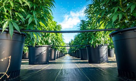 How To Make A Fortune In  The NEW Cannabis Bull Market
