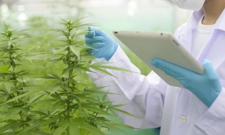 Supreme Cannabis shareholders greenlight deal with Canopy Growth worth $435 Million