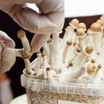 Crypto and Cannabis Backers Shift to Psychedelics