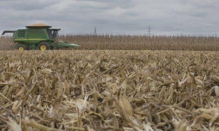 North American Farmers Baling Food Crops to Support Drought-hit Livestock Industry