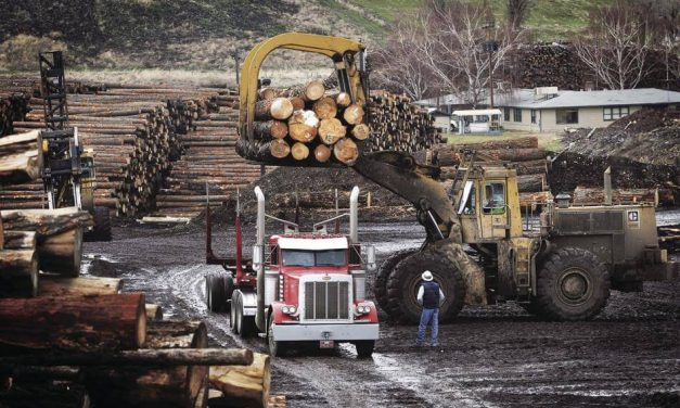 Lumber Prices Hit Plateau as Housing Reaches Equilibrium State