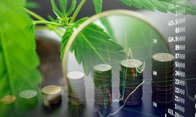 Why You Should Pay Attention to US Marijuana Stocks