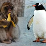 Trade on NFT Increases 8X as Penguins and Apes Drive the Market to New Heights